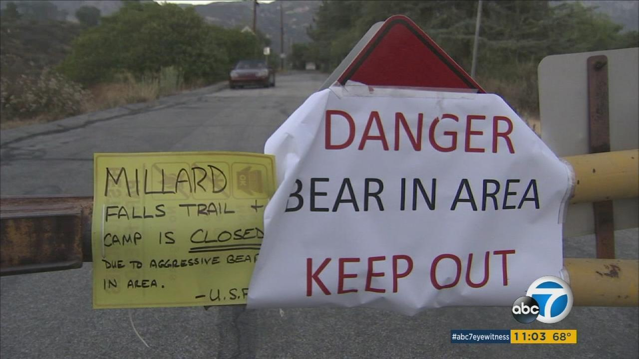 Two signs warn residents and campers to steer clear of Millard Canyon and its hiking trails after a bear scratched a man through his tent in Altadena.
