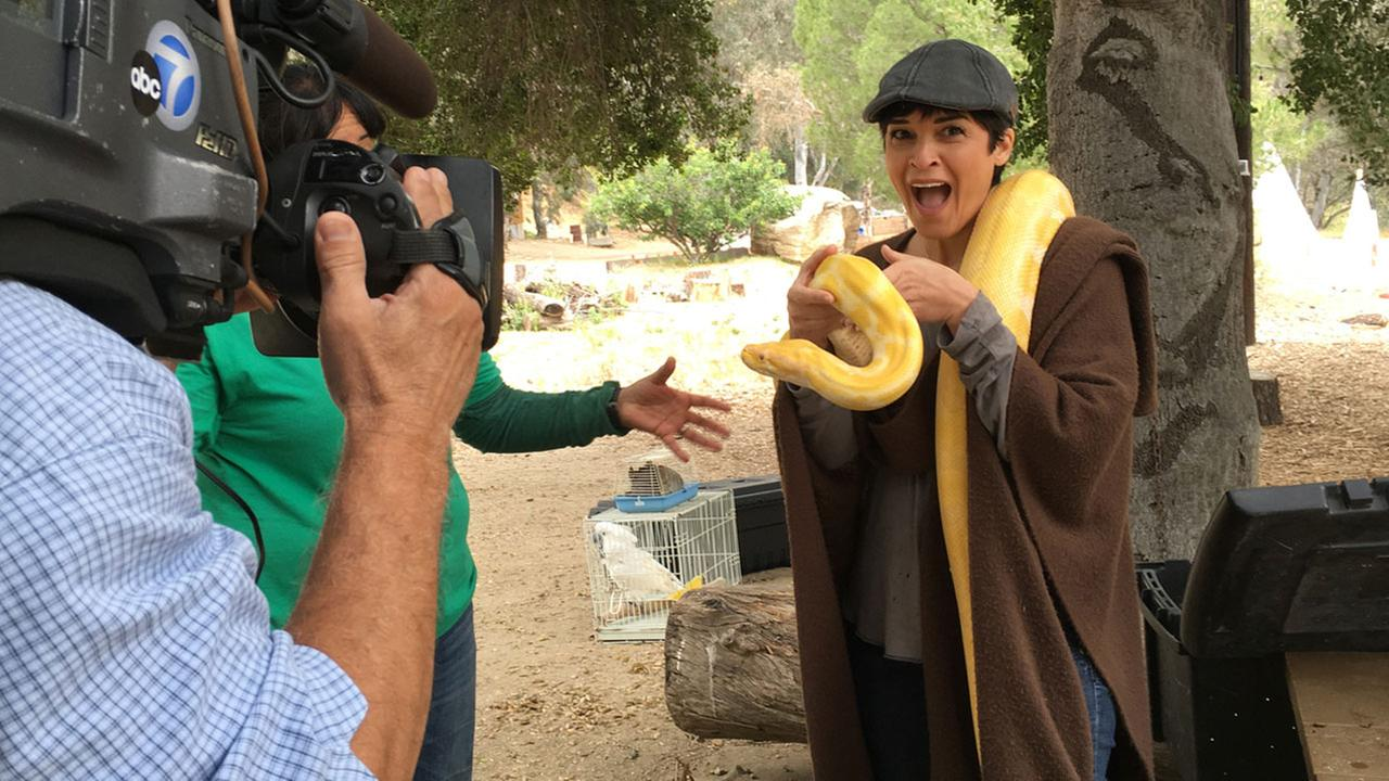 Eye on L.A. host Tina Malave holds a yellow python while visiting a wildlife center.