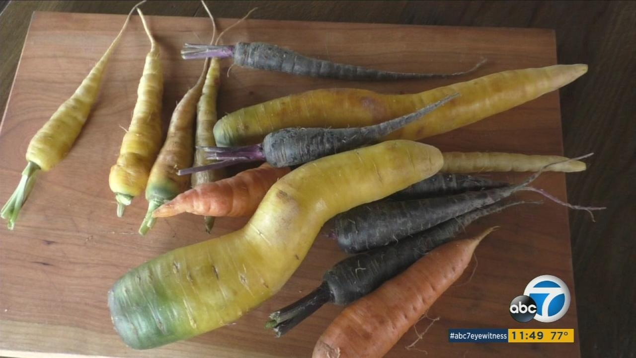 Most eat carrots in a salad or with dip, but there are so many flavorful dips, sauces and meals you can make with them.