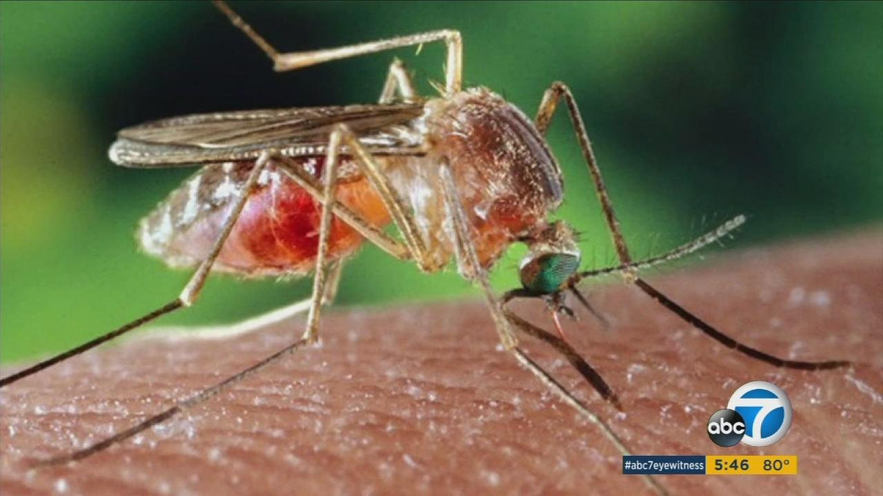 A virus known as St. Louis encephalitis has been detected in Orange County mosquitoes for the first time in 30 years, officials said.
