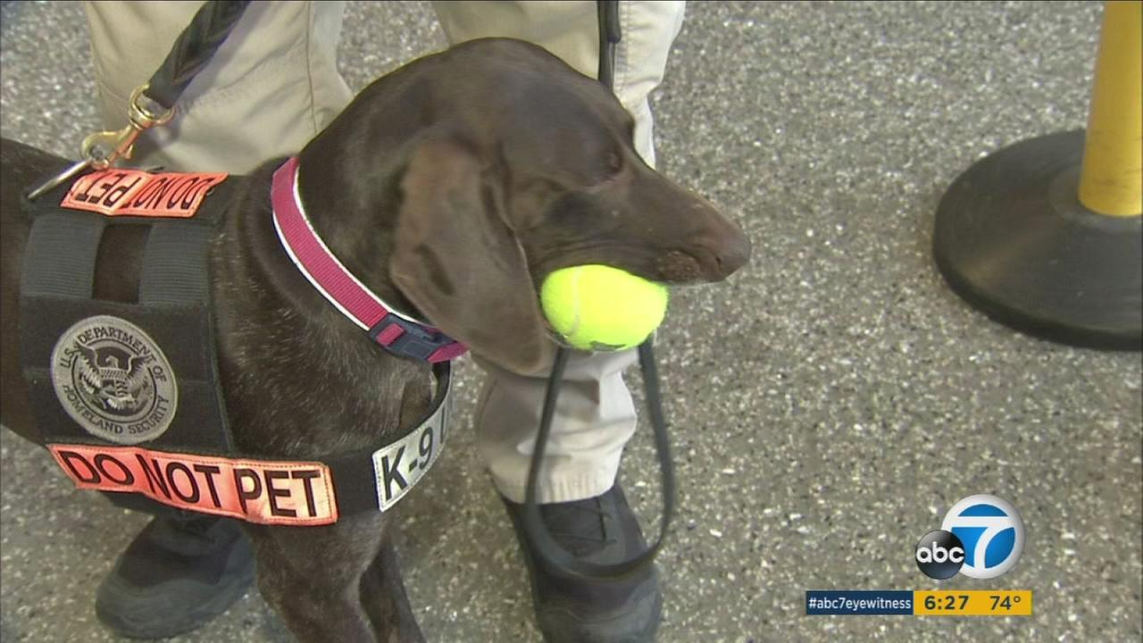 Bomb-sniffing K9s at LAX undergo rigorous training and have plenty of work at one of the worlds busiest airports.