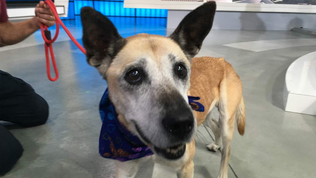 Our ABC7 Pet of the Week for Thursday, Oct. 120, is a 14-year-old shepherd mix named Mia. Please give her a good home!