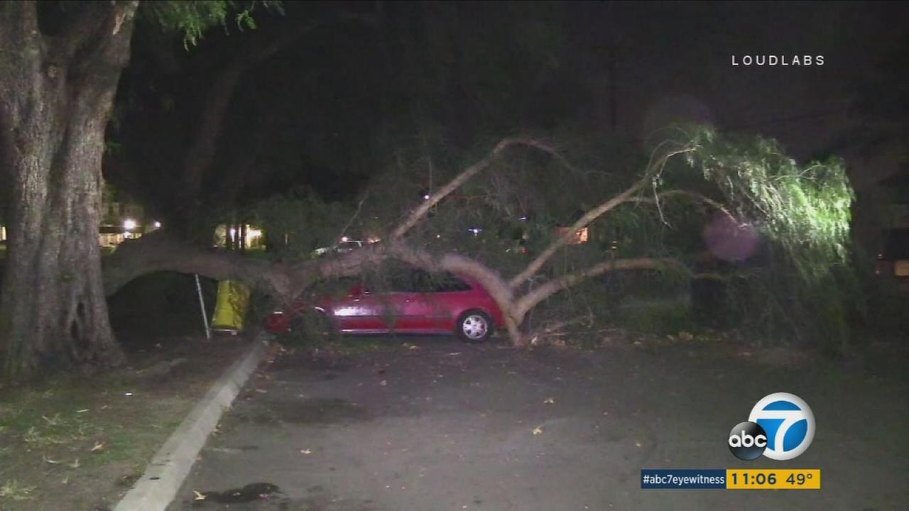 Wild winds whipped through Southern California on Friday, knocking down trees and overturning big rigs.