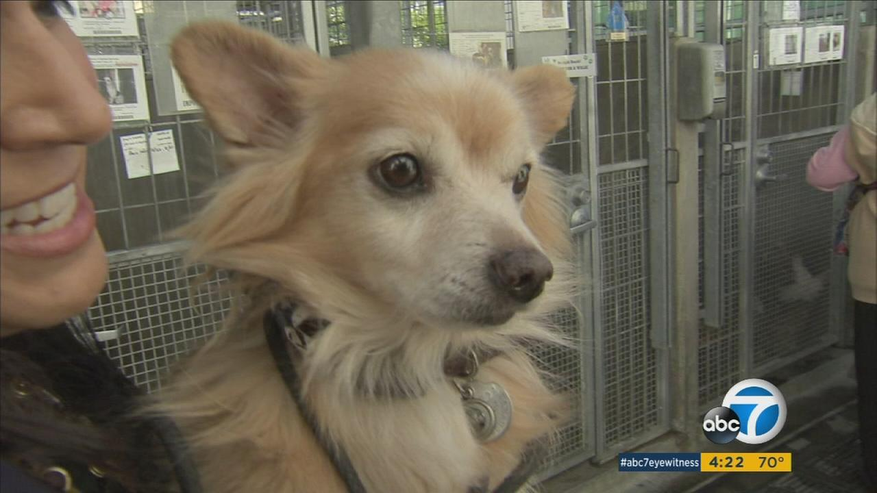 Six Los Angeles animal shelters are offering pet adoptions for only $20.17 from now until the end of the year.
