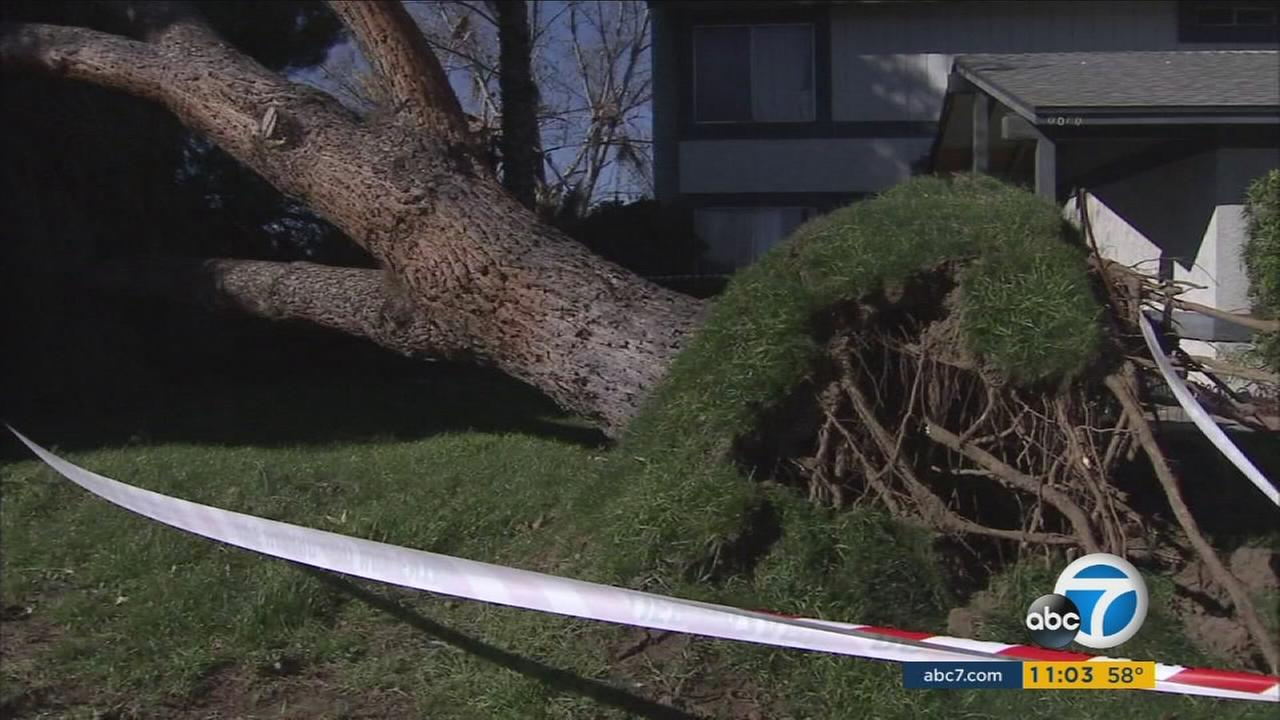 A large tree crashed onto a Rancho Cucamonga home during a strong wind storm on Friday, Jan. 27, 2017.