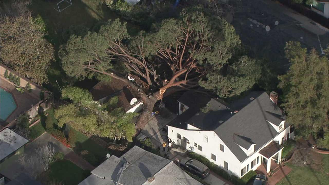 A massive tree is seen toppled atop a home in Pasadena.