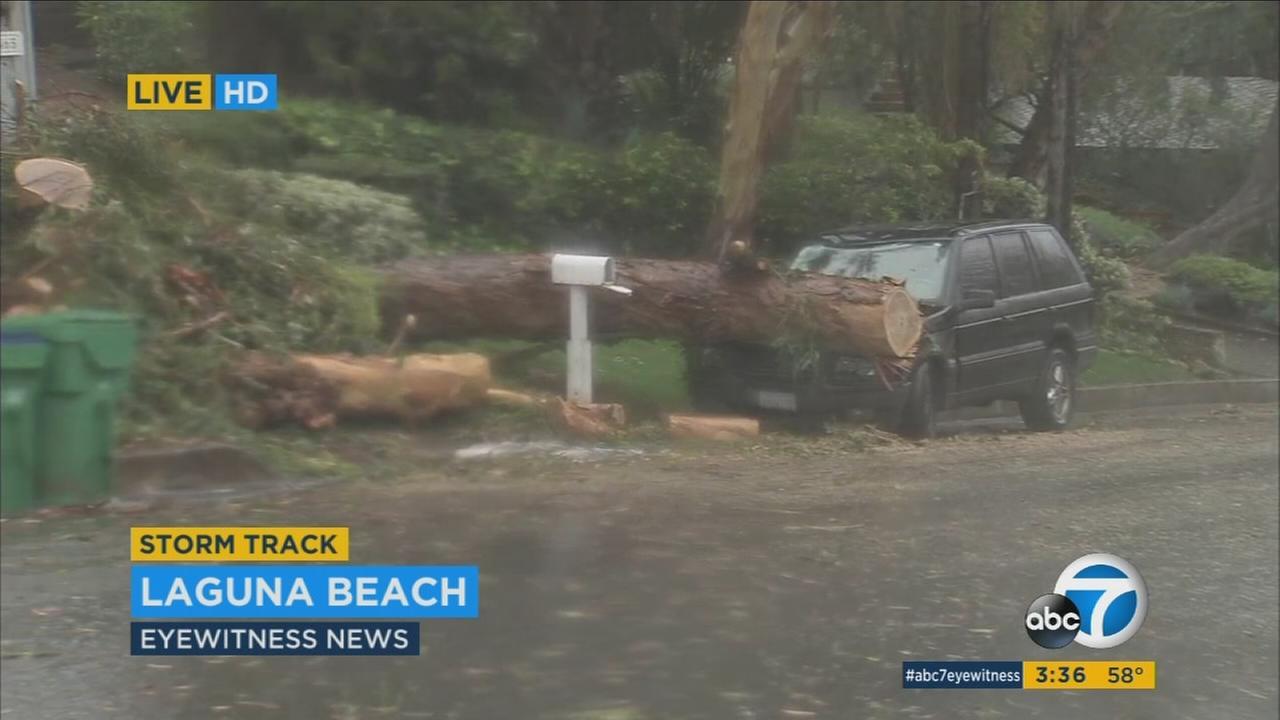 Storm brings trees crashing down in Orange County