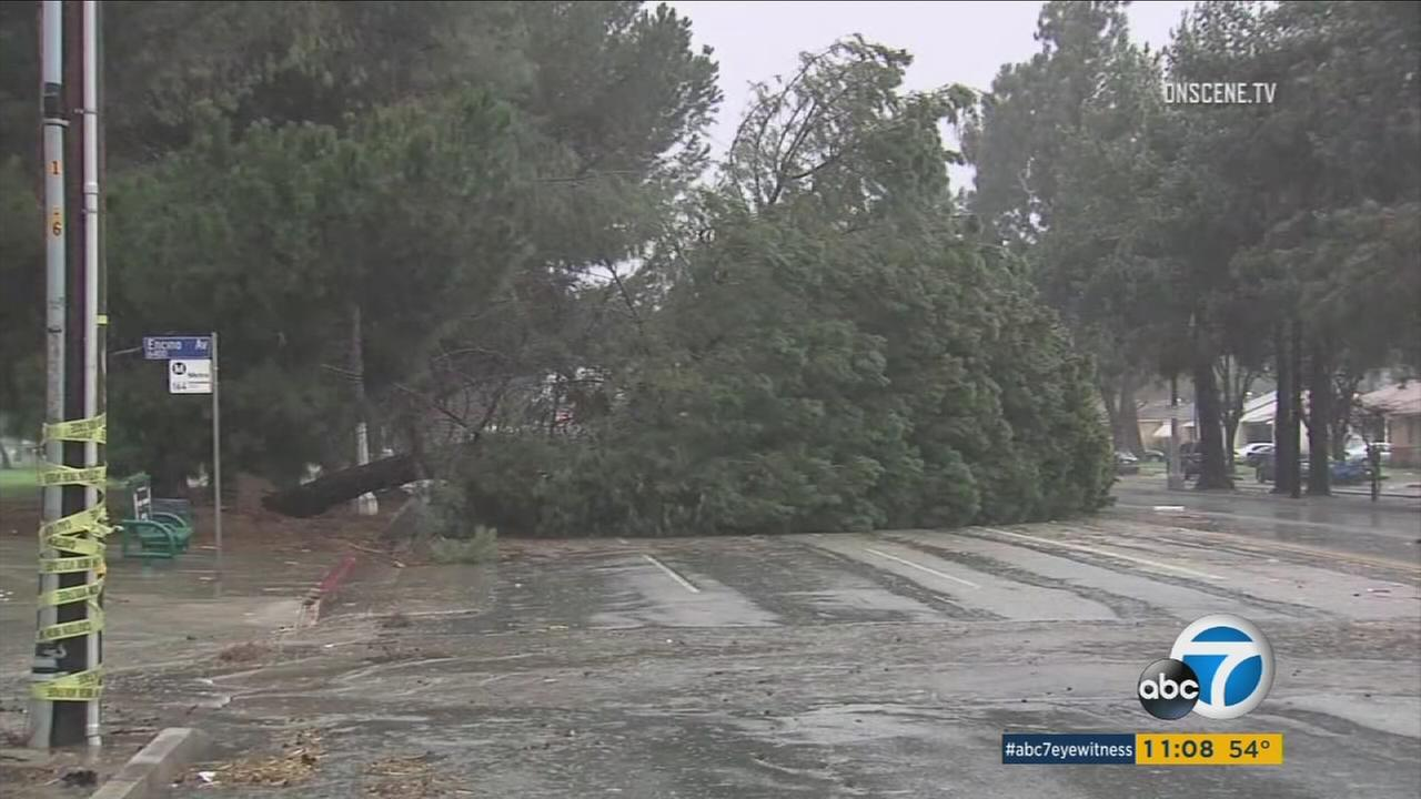 Fridays storm brought down trees and closed roads throughout Southern California.
