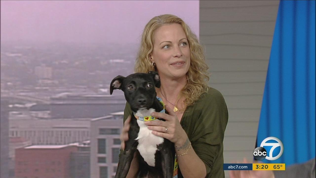 Alison Eastwood with Piper, a 15-week-old black lab/Staffordshire terrier mix that is among animals up for adoption through Eastwoodranch.org.