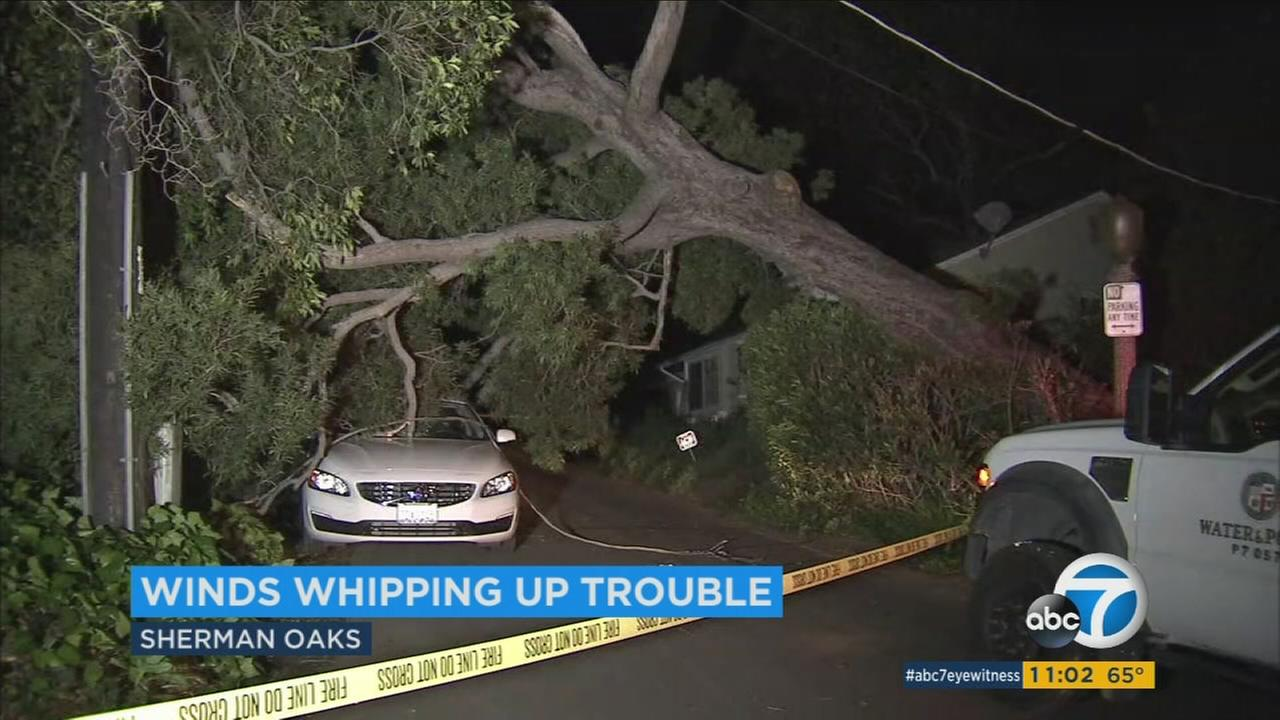 Mondays high winds brought down trees around the Southland and knocked out power to at least 13,000 customers in Los Angeles.