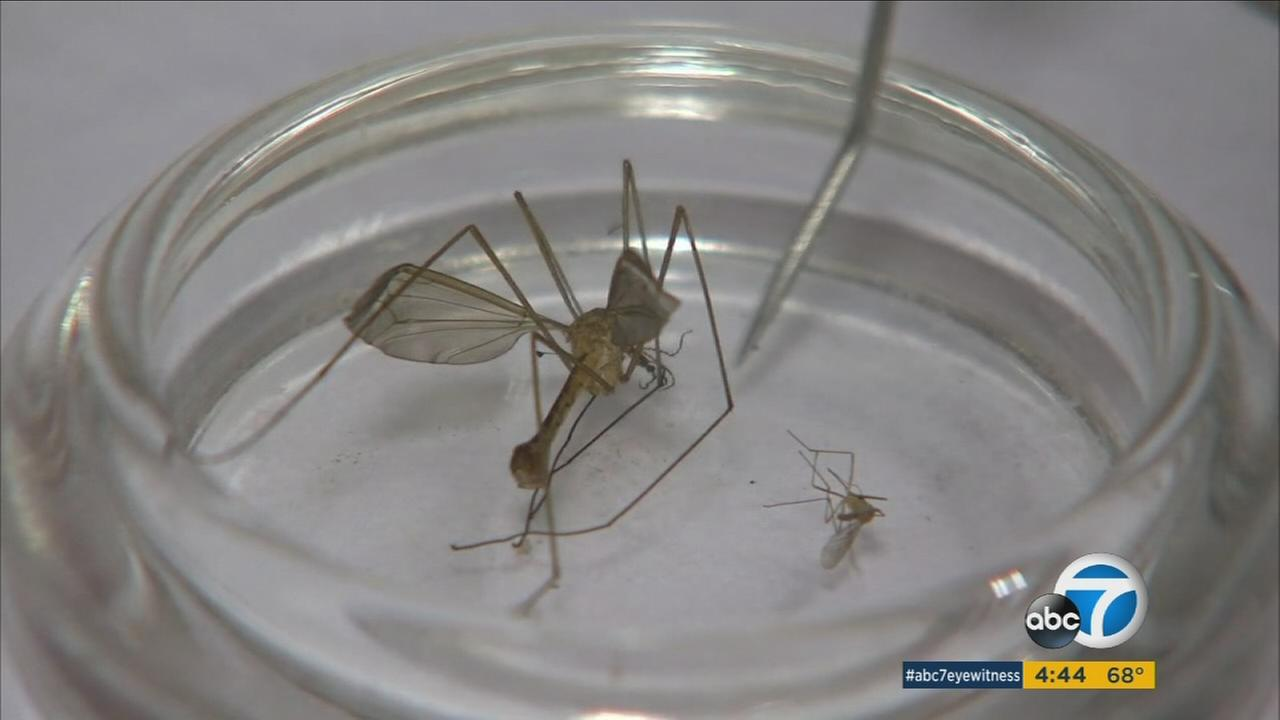 The heavy rains this winter are leading to a big increase in SoCals mosquito population.
