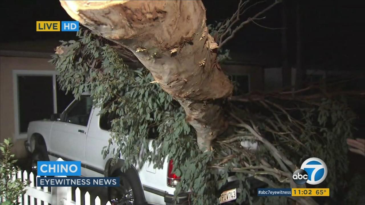 Powerful winds brought down a large tree branch on a Chino familys pickup in their driveway.