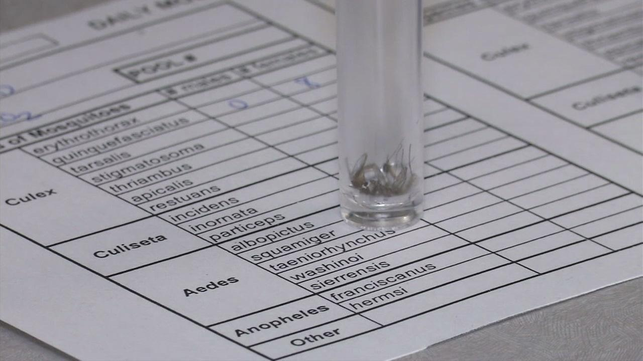 A mosquito in a vile is shown at a mosquito tracking facility in Orange County.
