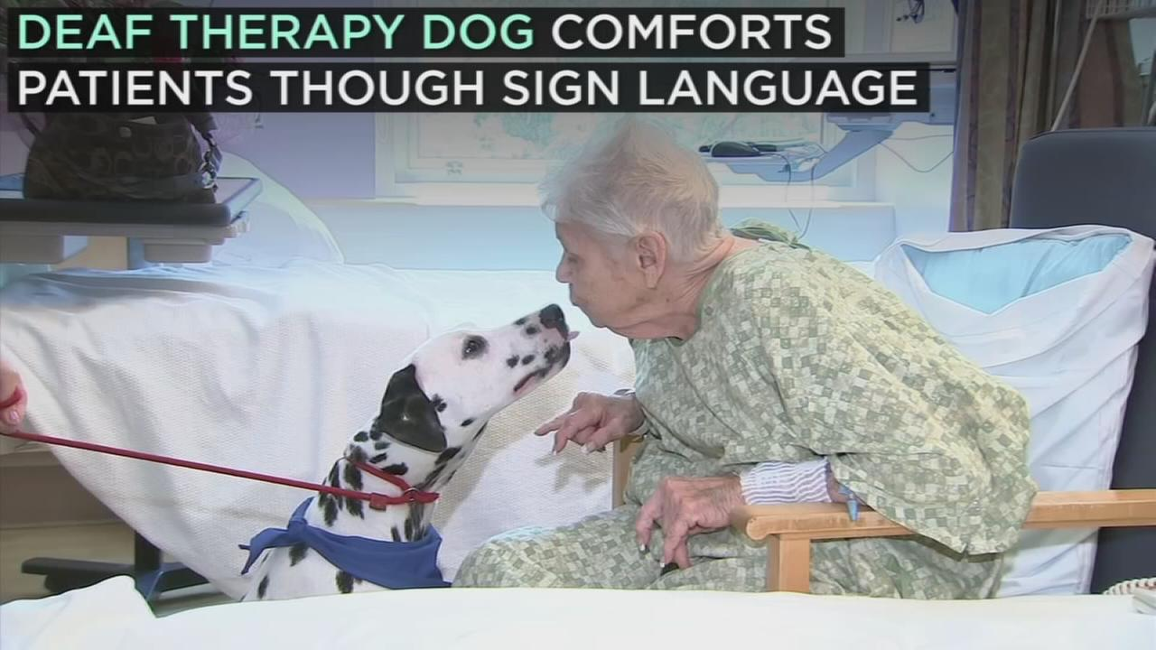 Charlie, a deaf therapy dog, comforts L.A. hospital patients by interacting with them through American Sign Language