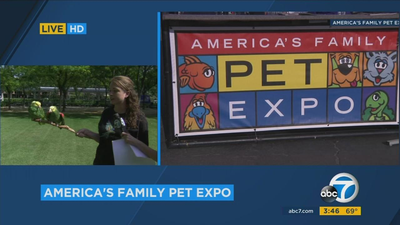 Some parrots are shown along with a sign of Americas Family Pet Expo at the ABC7 studios in Glendale, Calif. on Saturday, April 24, 2017.