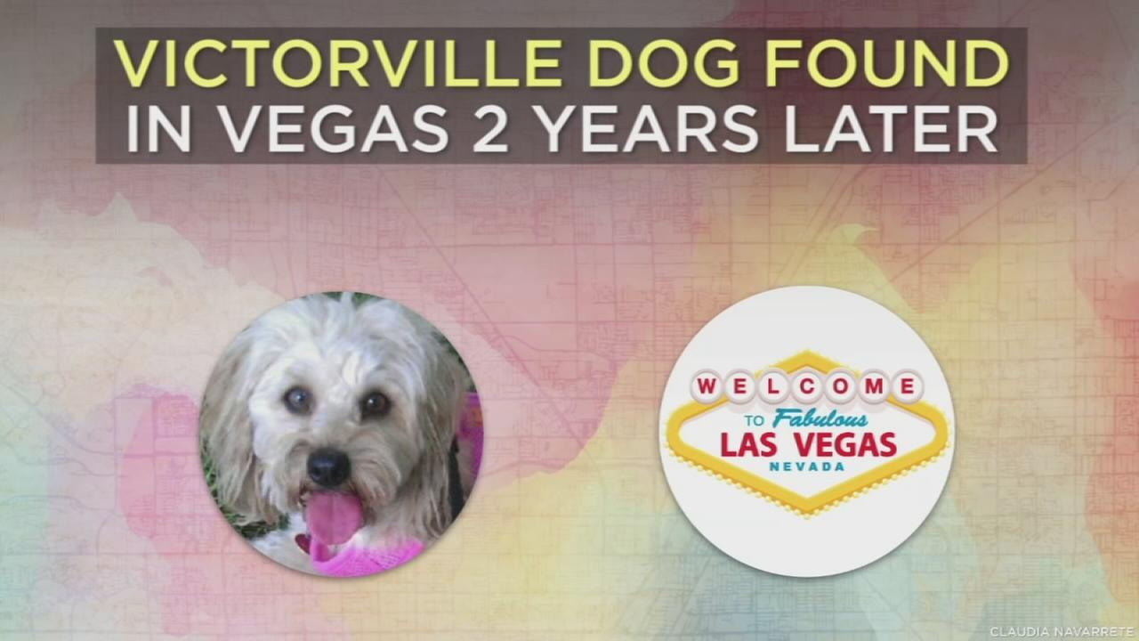 A Victorville family drove to Las Vegas to reunite with their beloved pet Bella after she went missing for nearly two years.
