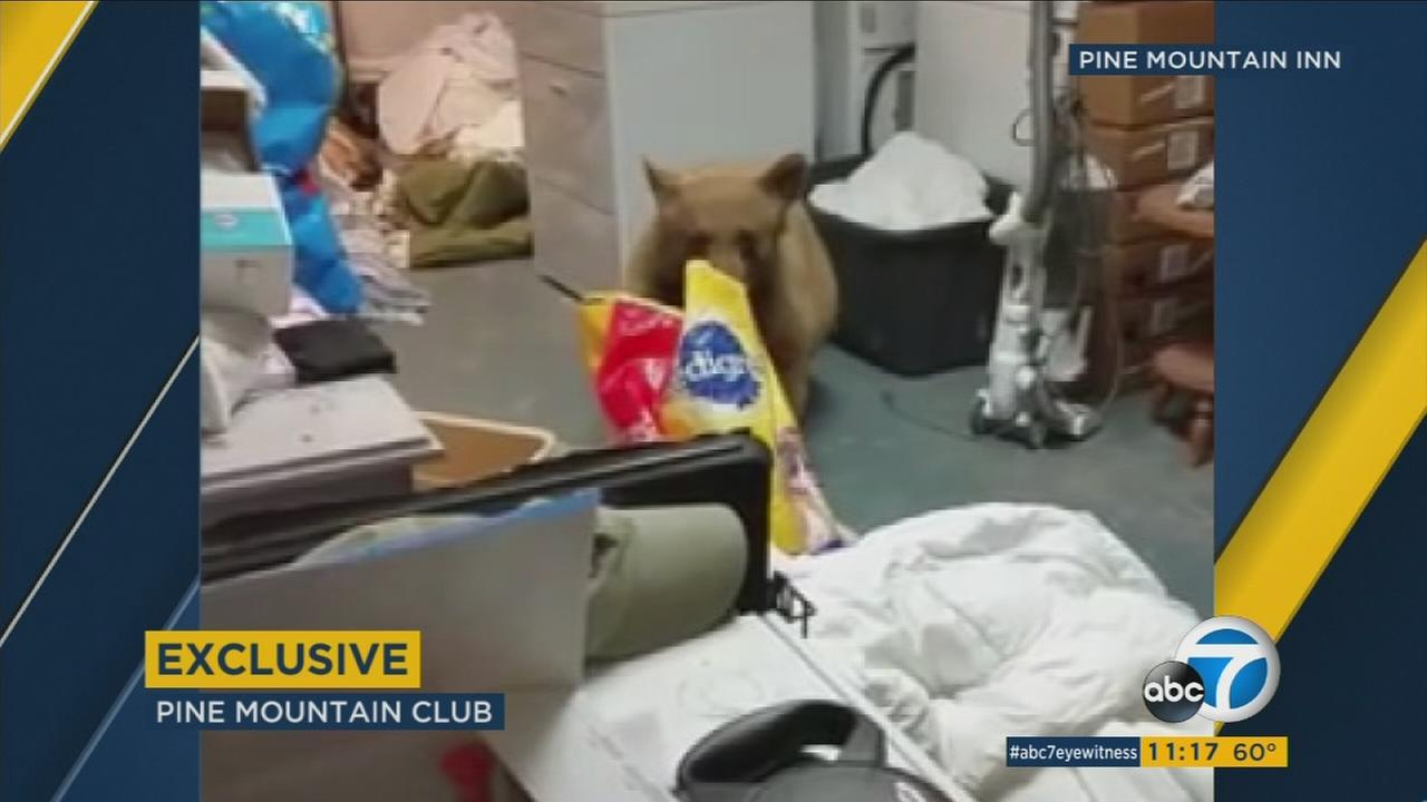 A bear is shown inside a Pine Mountain Club garage eating dog food.