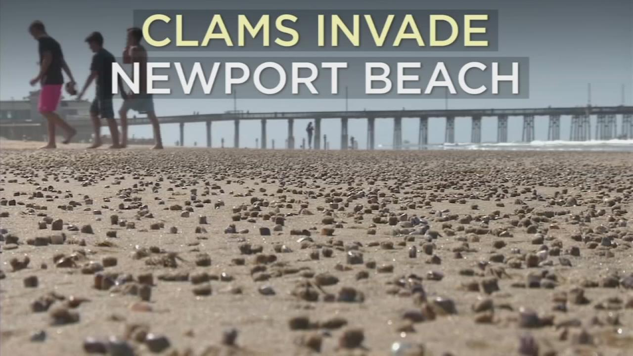 Experts say the arrival of thousands of clams in Newport Beach is an event that occurs only once or twice in a decade.