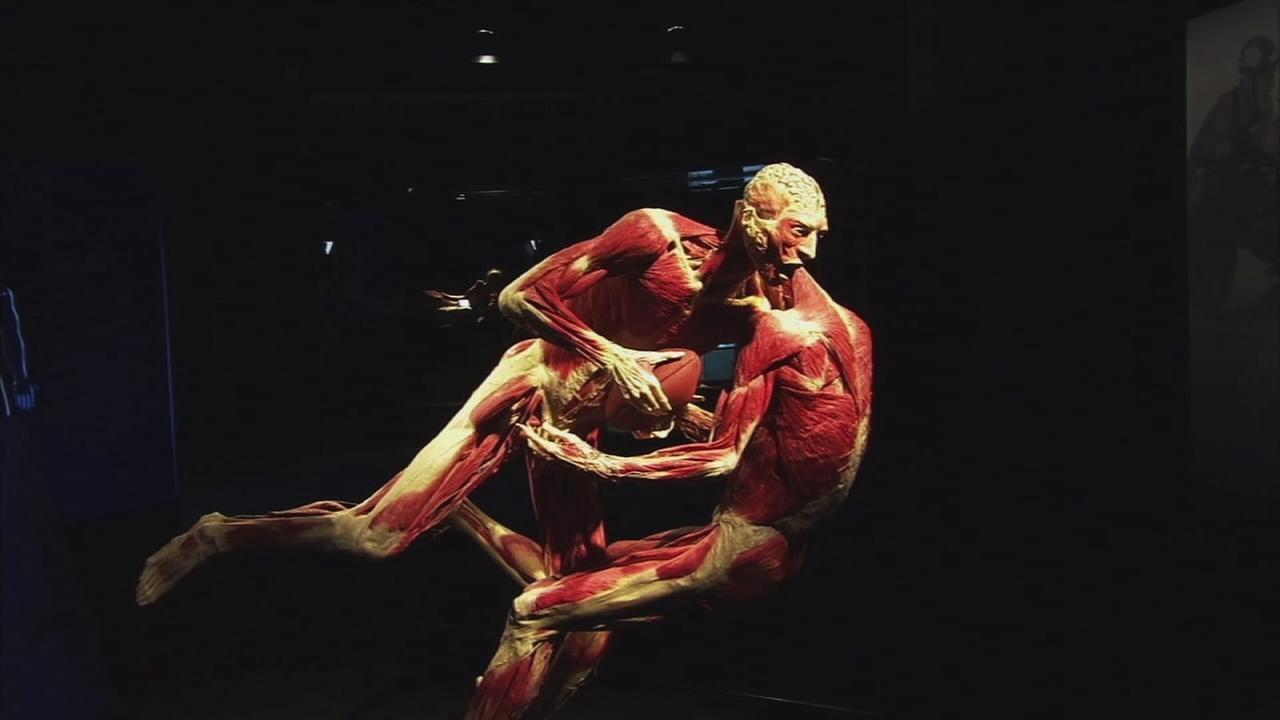 Bodies imitating a football move are shown in a photo from the Body Worlds: Pulse exhibit at the California Science Center.