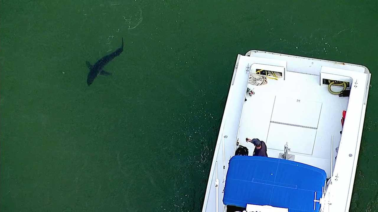 A shark is spotted near a boat in this undated photo.