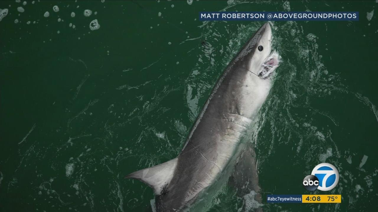 All beaches remained closed in San Clemente Monday after more than two dozen sharks were spotted off the coast.
