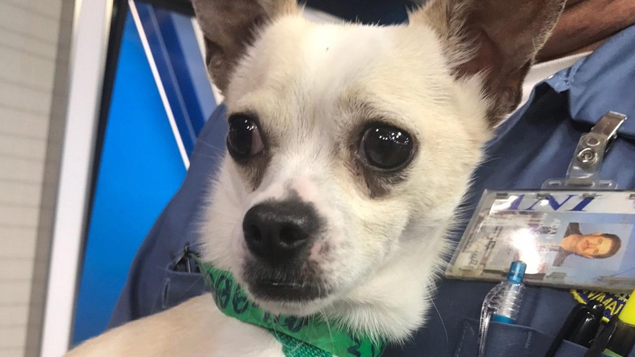 Pet of the Week: 2-year-old Chihuahua named Paco
