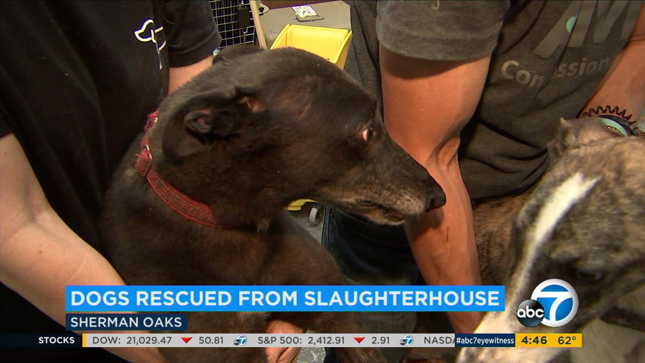10 dogs arrive in SoCal after being rescued from slaughterhouse in China