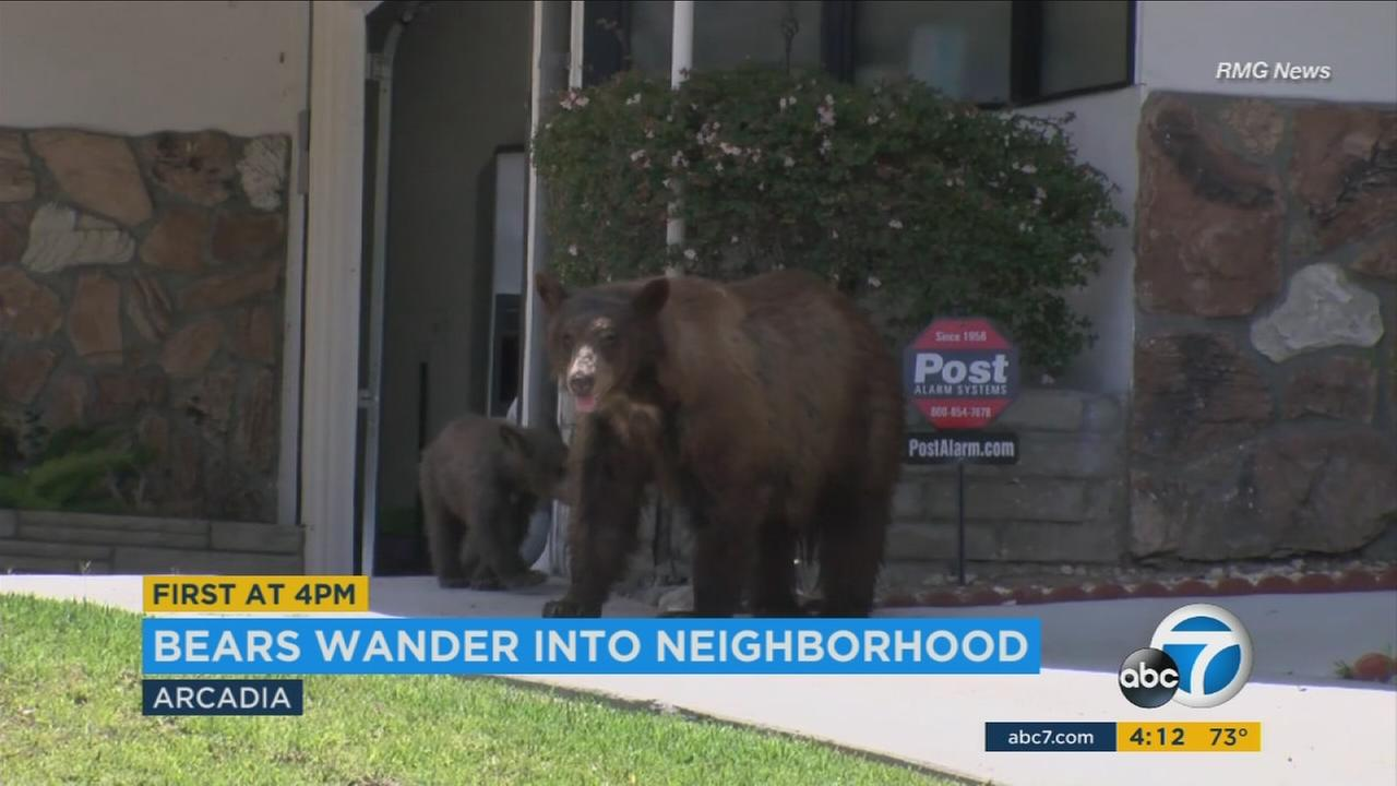A mama bear and cub poked around a garage in Arcadia before heading back to their habitat.