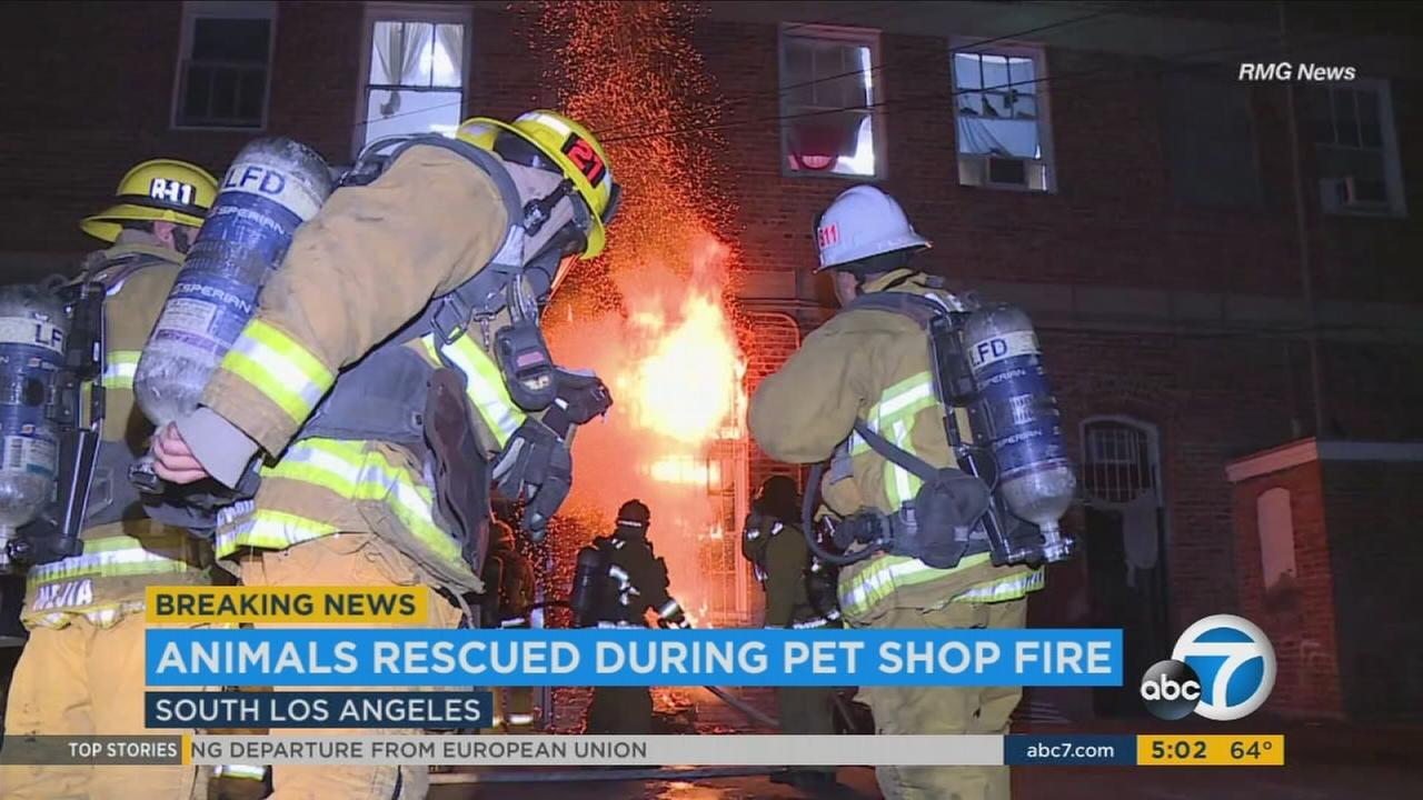 Dozens of animals rescued after fire at pet store in South Los Angeles