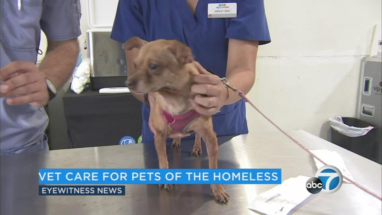 Pop-up clinic provides free vet care to LA's homeless with pets