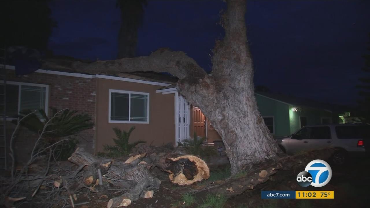 A tree toppled over a San Bernardino home during a raging storm slamming the Inland Empire on Tuesday, Aug. 1, 2017.