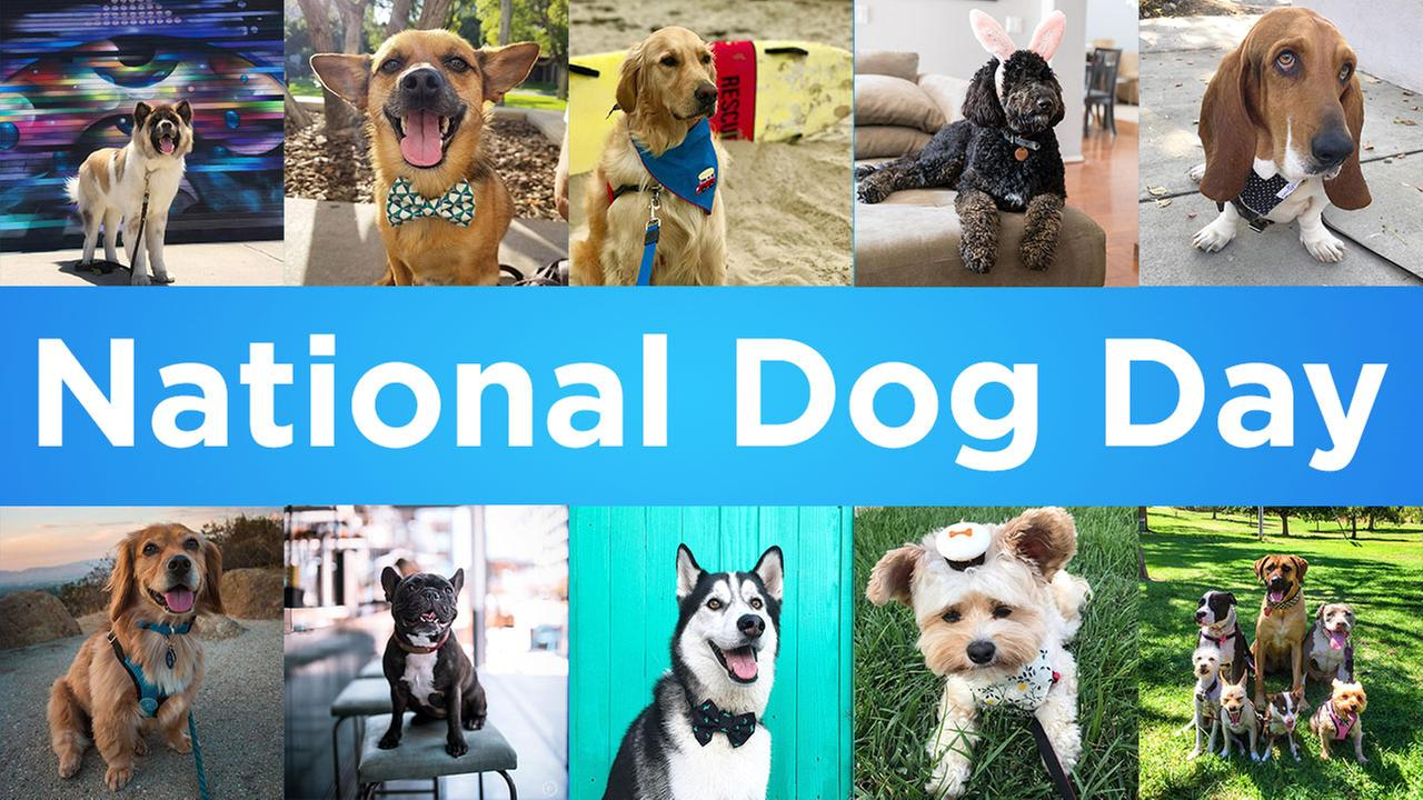 Every dog has its day - an expression thats especially true every year on Aug. 26, when National Dog Day is celebrated.