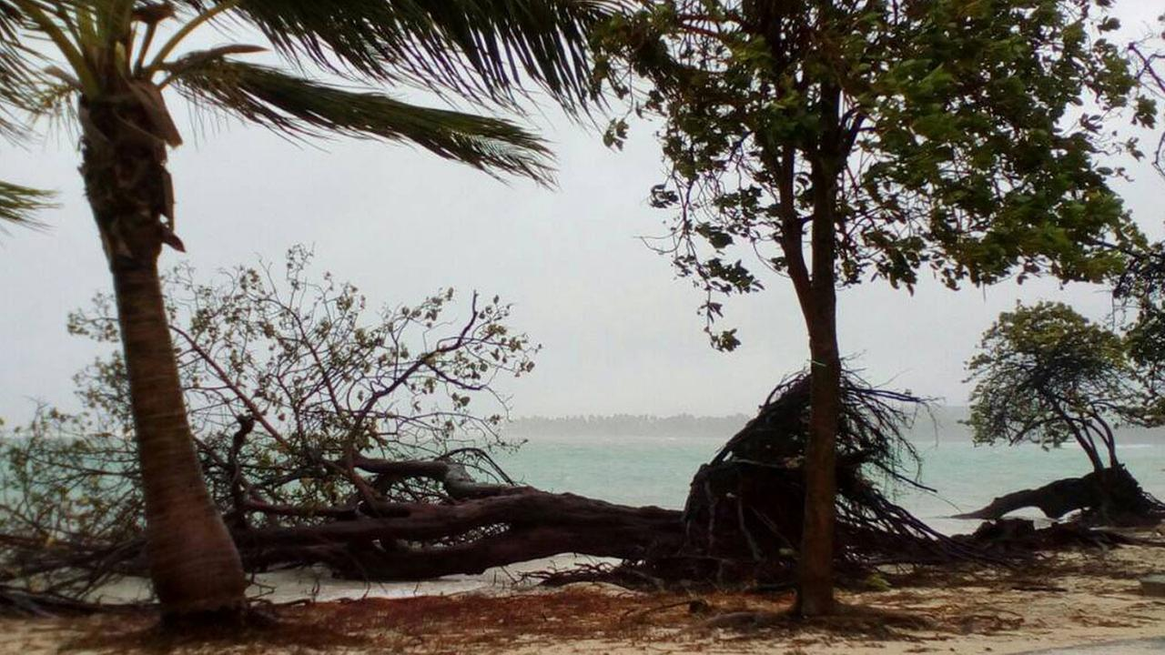 A tree lays on the shore of Sainte-Anne on the French Caribbean island of Guadeloupe, early Tuesday, Sept. 19, 2017, after the passing of Hurricane Maria.