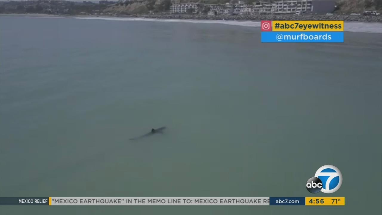 A shark off the Orange County coast is shown in a file photo.