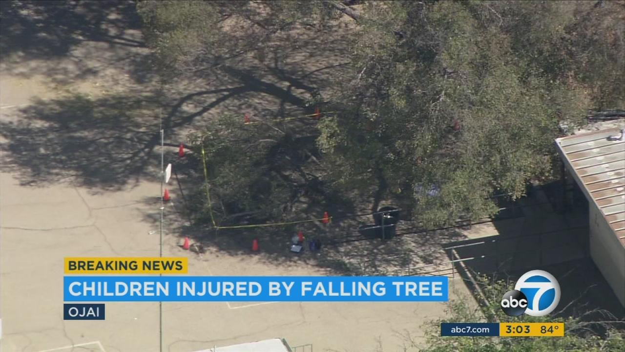 Five people were injured, two of them critically, after a tree fell at Topa Topa Elementary School in Ojai Monday, according to Ventura County fire officials.