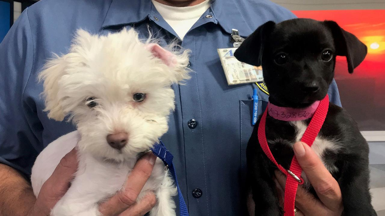 Pet of the Week: Dachshund mix Rosie and maltese Sam
