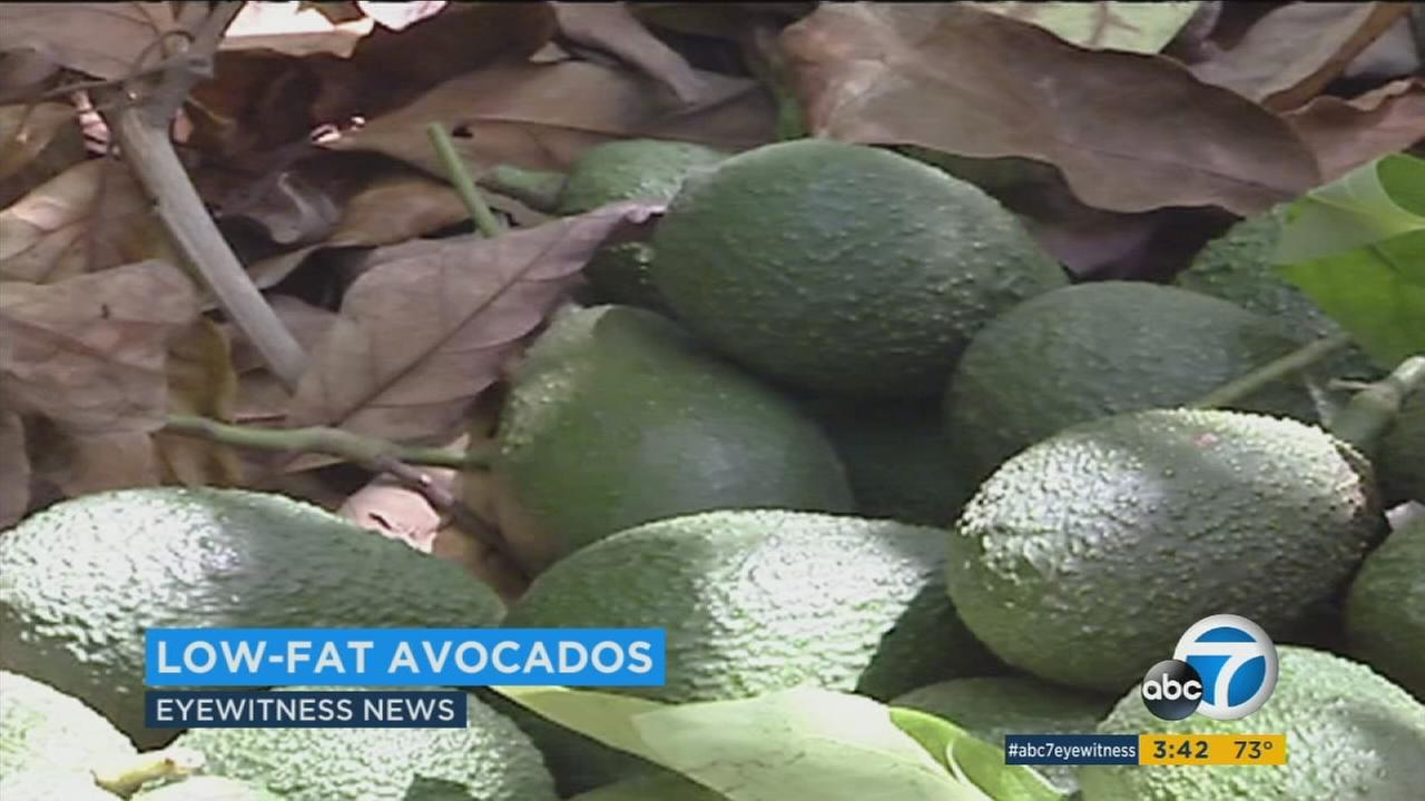 Do you love avocados but worry about putting on the extra pounds? A Spanish company has come up with a solution.