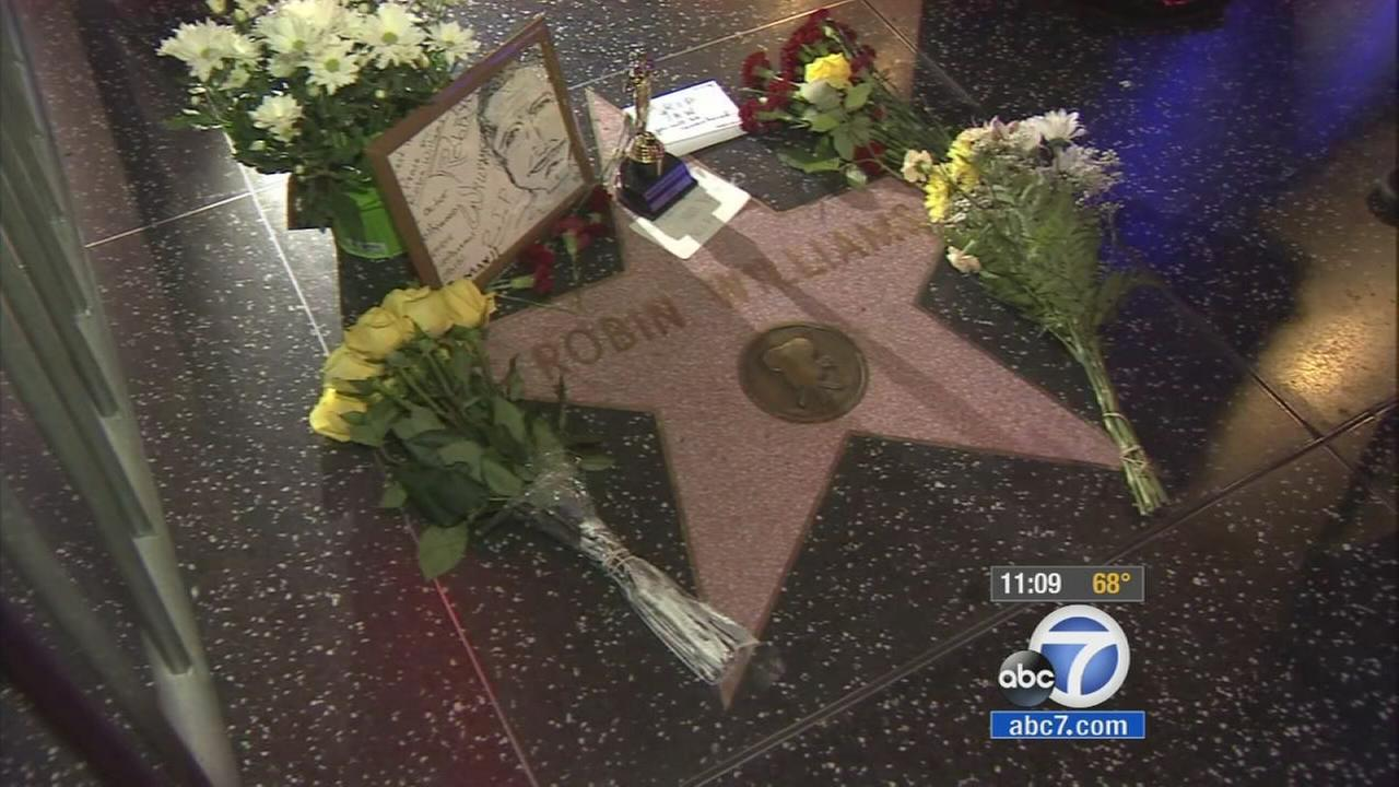 Tributes are laid around Robin Williams Hollywood Walk of Fame star on Monday, Aug. 11, 2014.