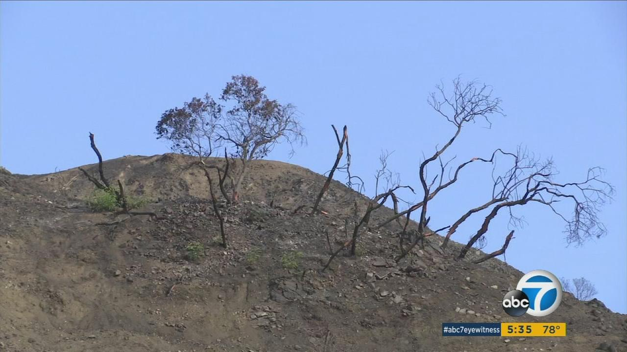 The La Tuna Fire last month ate up all the vegetation surrounding hundreds of homes in Burbank, leaving behind barren hillsides.