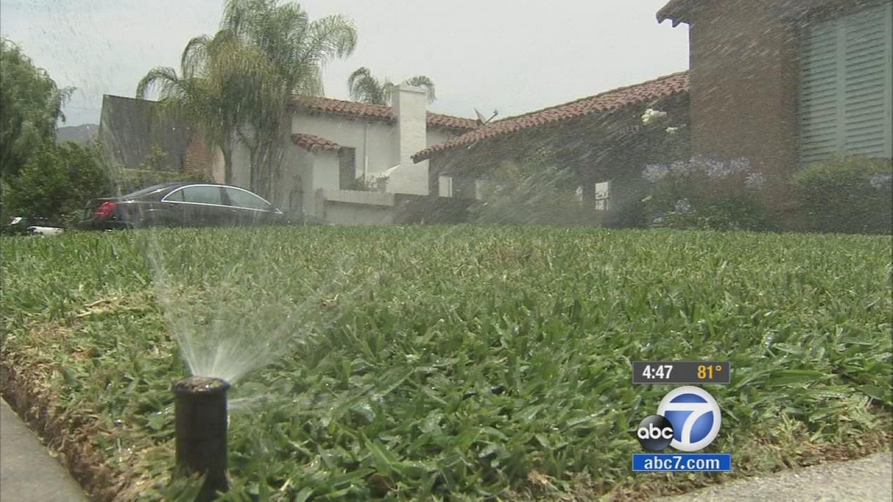 Sprinklers water a lawn in this undated file photo.