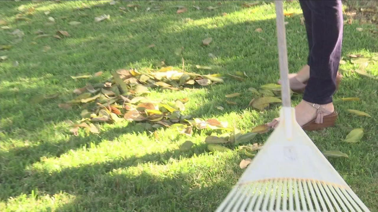 Raking leaves can trigger a major sneezing attack for people with allergic rhinitis.