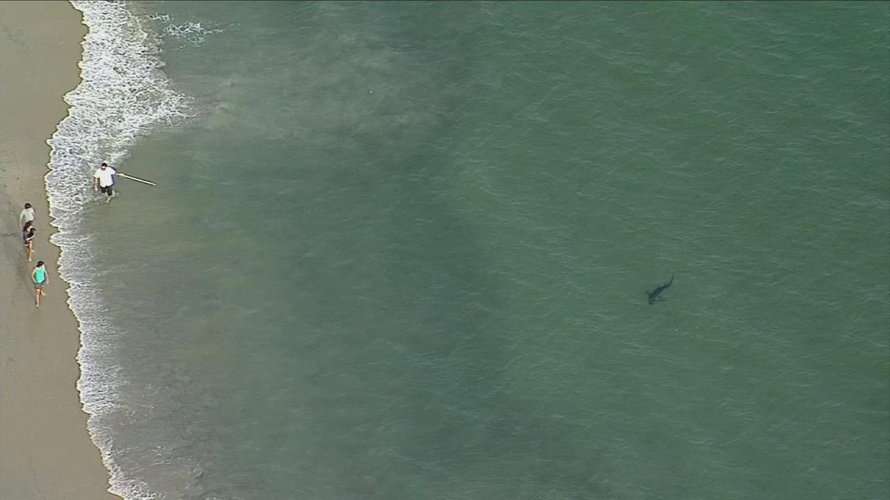 One of several shark sightings in Southern California in 2017.