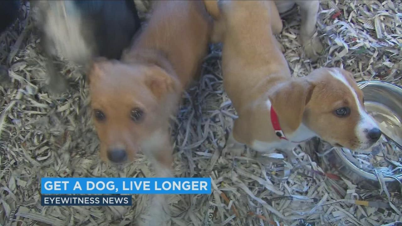 Swedish research study shows dog owners live longer