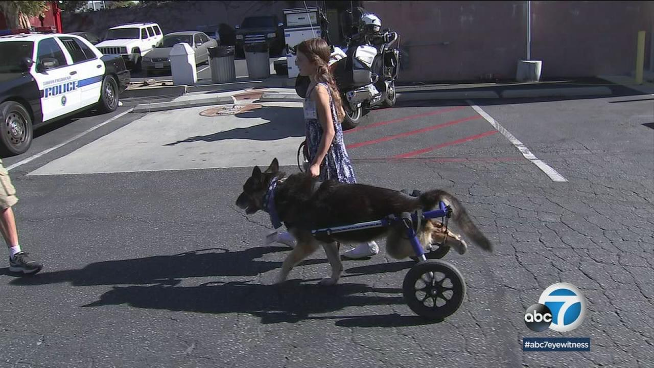 South Pasadena police have added a local 8-year-old and her dog suffering from a degenerative disease as honorary members.