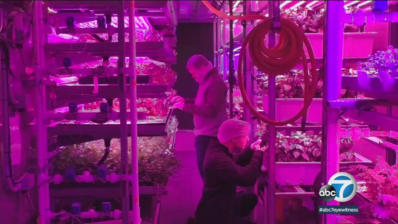 New hydroponic farming methods using recycled shipping containers allow for up to five acres of produce to be grown.