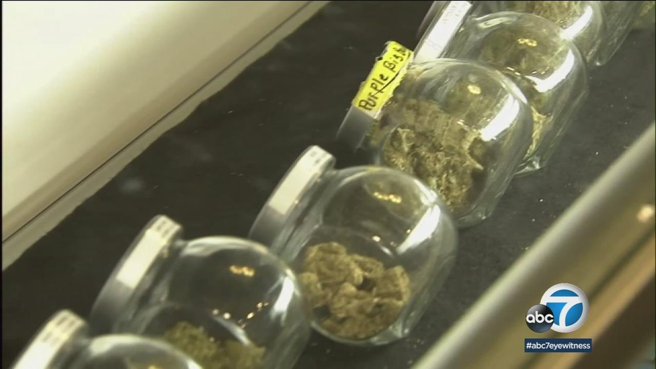 Different strains of marijuana are shown in a dispensary display in a file photo.