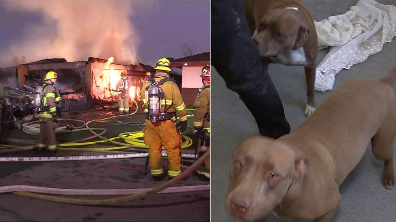 Firefighters rescued three people and seven dogs as a Hemet home was destroyed in an early-morning fire.