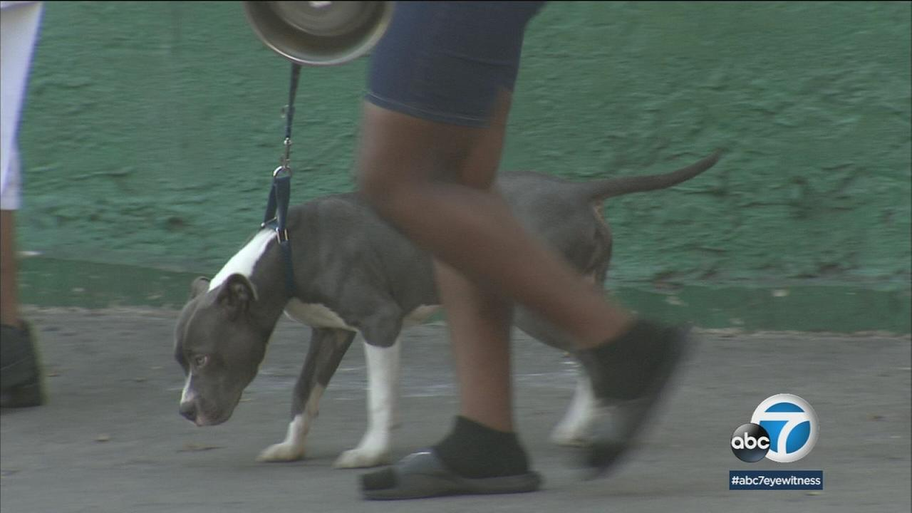 LA is responding to calls for help from dog owners asking for protection from aggressive pit bulls on Skid Row.