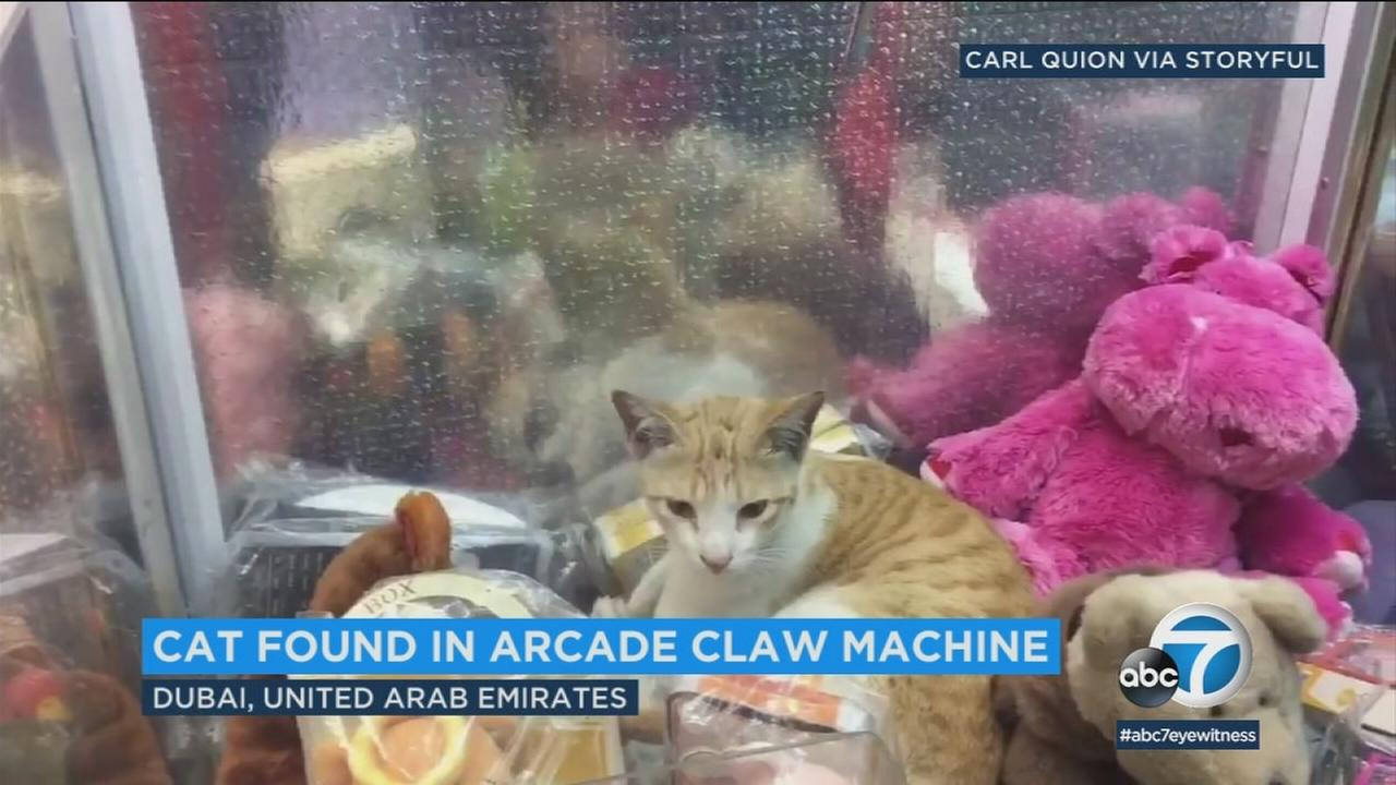 A young cat is shown inside a claw machine in Dubai after two friends discovered it.