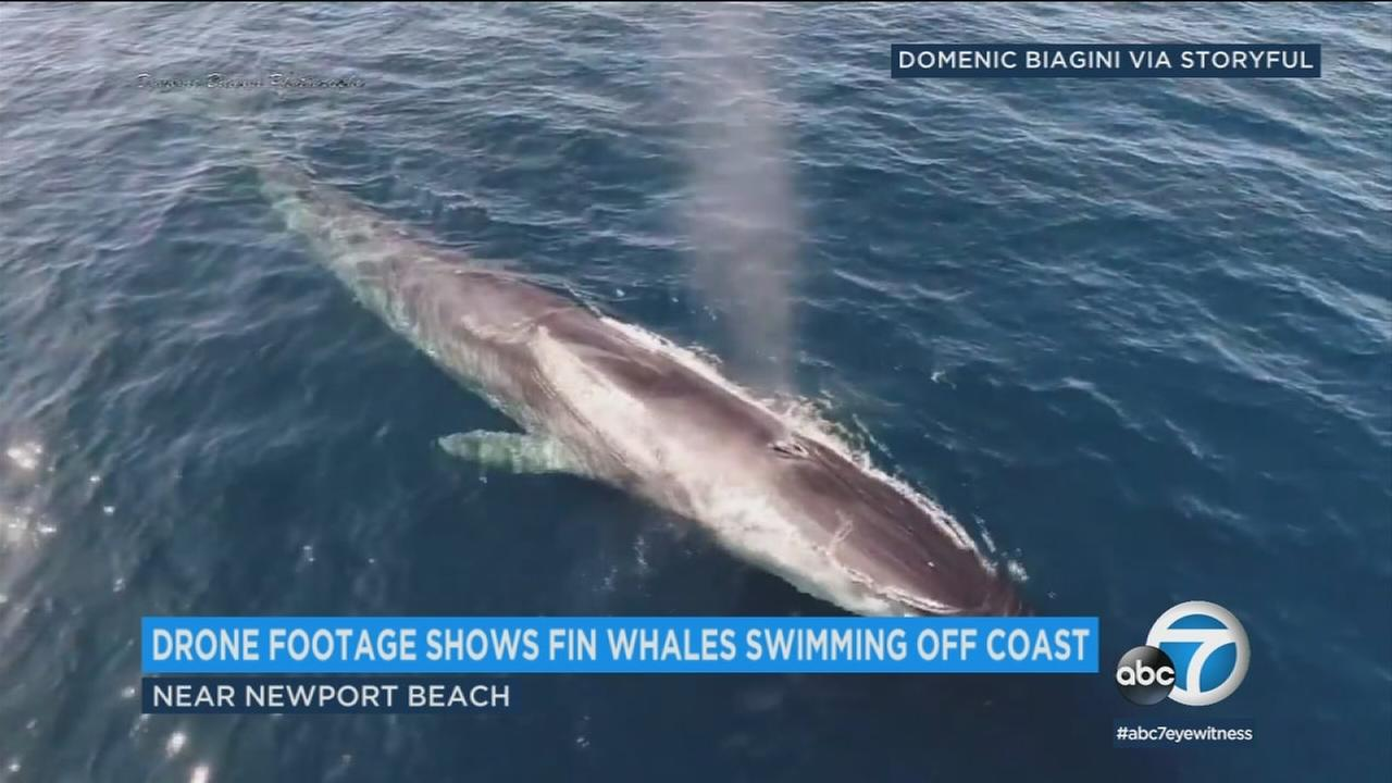 A boater caught some breathtaking footage of fin whales off the coast of Newport Beach.